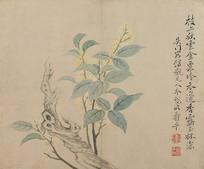 清代恽寿平花卉图册之桂花