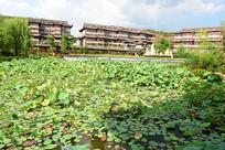 一池荷花一池绿色