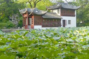 上海市南翔古镇古猗园荷塘畔