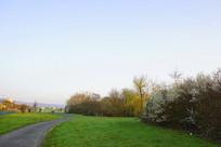 欧洲郊野初春开花的灌木丛