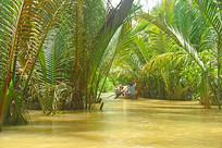 越南湄公河上生长的水椰树