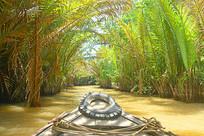 越南湄公河运河边的水椰树
