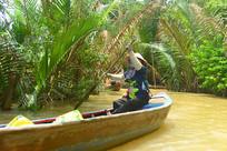 越南九龙江上生长的水椰树