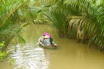 越南槟知省九龙江生长的水椰树