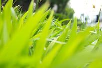 绿油油的小草