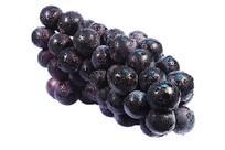 45度放置的新鲜黑紫大葡萄