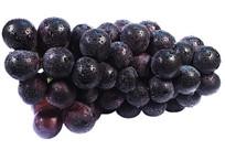一串横放的新鲜黑紫大葡萄