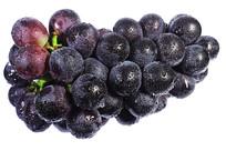 一串新鲜紫红大葡萄