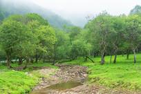 穿过丛林的小河
