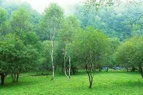 森林绿草地