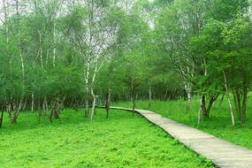林间的木板景观路