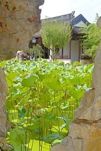 上海古猗园假山和瘦影碎月轩