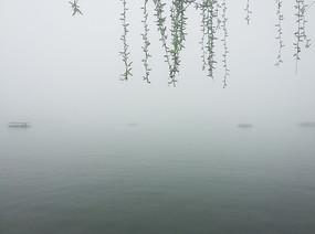 杭州西湖早春烟波绿柳景观