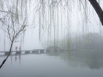 杭州西湖早春杨柳岸小桥湖水