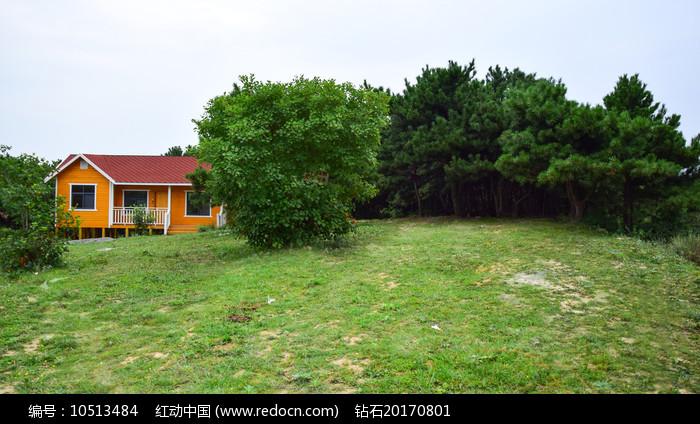 绿色的草地和松树林图片