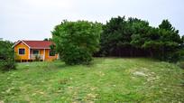 绿色的草地和松树林