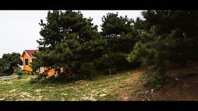 松树林自然风景摄影