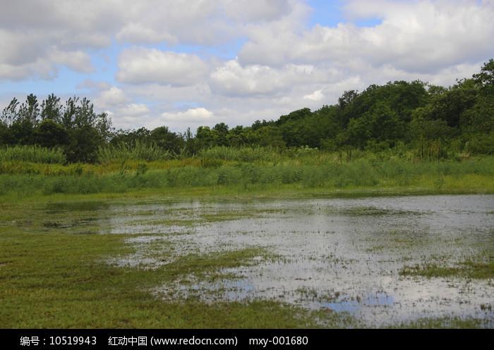 户外湿地图片