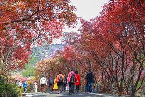 济南红叶谷之路