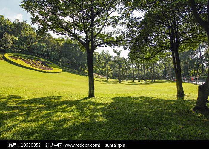 林间草地图片