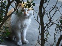 窥视的小花猫