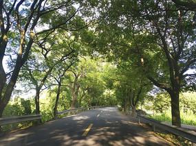 斑驳林荫路