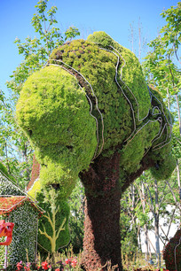园艺造型绿树