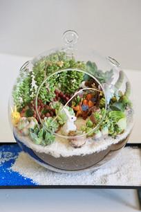 玻璃球瓶多肉植物家园