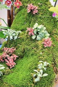 苔藓上的花草园艺展