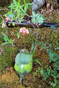 酒杯中的园艺种植