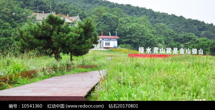 绿色草地间的步道图片