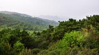山坡上的绿色植被