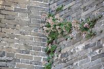 城墙长野花