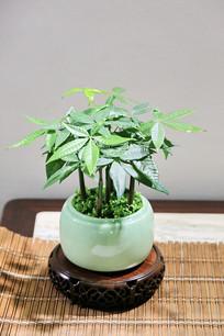 青瓷盆景绿植