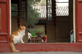 北京龙泉庵听泉小榭茶馆的小猫