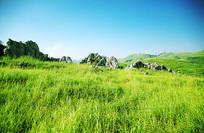 南方草原的草和石头山