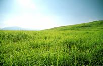 南方草原的绿
