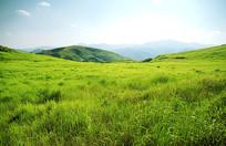 南方草原的绿草蓝天