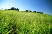 南方草原浓密的草