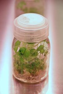 农业科技培植秧苗