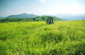 阳光下的南方大草原