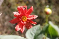 湖北武当山上的野花