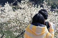 梅树下恋人-那时花开