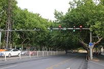 邯郸街景绿化街道