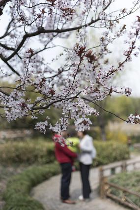 樱花树下的一家三口