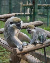 晒太阳的猴母子