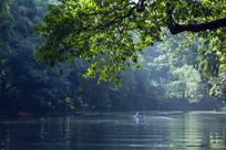 户外森林和幽静湖面