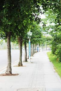 站成一排笔直的树