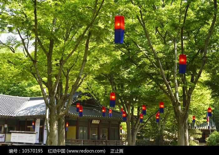 韩国民俗村的传统红蓝色灯笼图片
