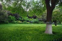 济南大明湖公园风景